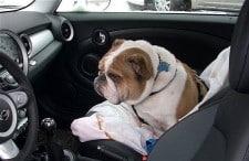 Mantener limpio tú auto con un perro